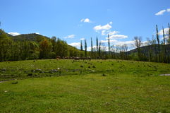Красивый ландшафт, Castejon de Sos Стоковое Фото