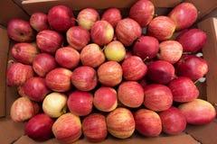 Красивый аппетитный красный цвет предпосылки плодоовощ с красными яблоками Стоковое фото RF