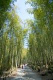Красивый бамбуковый лес в Тайване стоковые изображения rf
