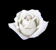 Красивый белый искусственный розовый изолированный цветок стоковое изображение rf