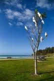 Красивый белый какаду садить на насест на дереве Стоковые Изображения