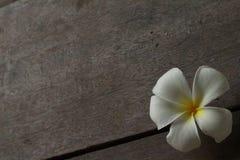 Красивый белый цветок на поле Стоковое Фото
