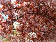 Красивый большой конец-вверх дерева с голубым небом Стоковые Фотографии RF