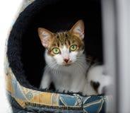 Красивый большой наблюданный кот смотрит вне от его дома стоковое изображение rf