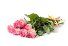 Красивый букет бежевых роз с розовой границей Стоковые Изображения
