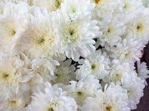 Красивый букет белых хризантем Стоковые Фотографии RF