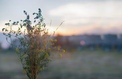 Красивый букет в поле на заходе солнца Стоковые Фотографии RF