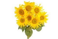 Красивый букет желтых солнцецветов Стоковая Фотография