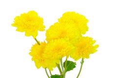 Красивый букет желтых цветков в cream цвете стоковая фотография