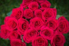Красивый букет красных роз в естественном свете, влюбленности и романтичной предпосылке Стоковое фото RF