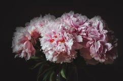 Красивый букет розового цветка пиона на черной предпосылке Лето пионов флористическая влюбленность Новым переконструированная отп Стоковые Фотографии RF