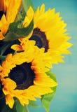 Красивый букет солнцецветов в белой вазе Стоковая Фотография RF