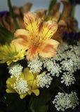 Красивый букет цветка разнообразия в крупном плане Стоковые Изображения