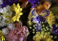 Красивый букет цветка разнообразия в крупном плане Стоковое фото RF