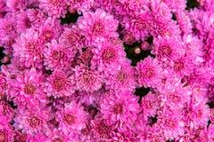 Красивый букет ярких wildflowers в ведре Стоковая Фотография RF