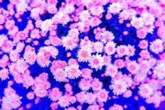 Красивый букет ярких wildflowers в ведре Стоковая Фотография