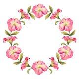 Красивый венок акварели цветка петуньи иллюстрация штока