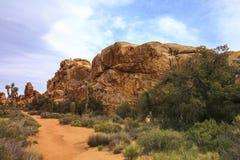 Красивый взгляд ландшафта валунов, деревьев, кактусов от тропы в национальном парке дерева Иешуа, Калифорнии, США стоковое изображение rf