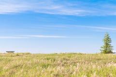 Красивый взгляд ландшафта зеленой травы с backgro голубого неба Стоковое Фото