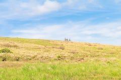 Красивый взгляд ландшафта и зеленая трава PA Utsukushigahara Стоковые Изображения