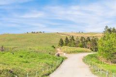 Красивый взгляд ландшафта wi проселочной дороги и зеленой травы Стоковое фото RF