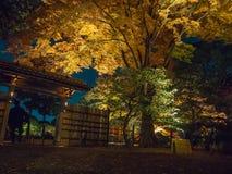 Красивый взгляд ночи ландшафта осени с желтыми деревьями осени и листьями, красочной листвой в парке осени на Стоковые Изображения