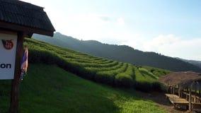 Красивый взгляд панорамы ландшафта плантации чая 101 в ярком дне на предпосылке голубого неба, достопримечательности сток-видео