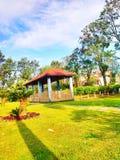 Красивый взгляд парка и вокруг дерева стоковое изображение rf
