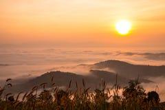 Красивый взгляд солнечности Стоковая Фотография RF