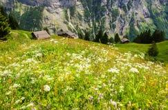 Красивый взгляд ландшафта очаровывать горное село Murren с долиной Lauterbrunnen и швейцарцем Альпами, зоной Jungfrau стоковые фото
