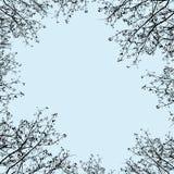 Красивый взгляд глаза муравья разветвил ветви иллюстрация штока