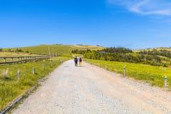Красивый взгляд дороги ландшафта Utsukushigahara, Nagano, Ja Стоковое Фото