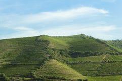 Красивый взгляд сельской местности и виноградника Стоковое Изображение