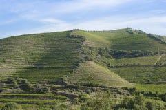 Красивый взгляд сельской местности и виноградника Стоковые Изображения