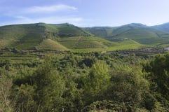 Красивый взгляд сельской местности и виноградника Стоковая Фотография RF