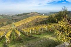Красивый взгляд сельской местности и виноградников Стоковое Изображение RF