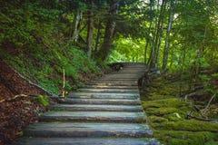 Красивый вид в национальном парке озер Plitvice Хорватия стоковое изображение rf