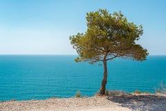 Красивый вид голубых моря и неба сосенка Стоковые Изображения RF