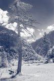 Красивый вид гор с озером и лугом стоковое фото rf