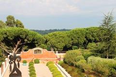 Красивый вид деревьев в St Tropez стоковое изображение rf