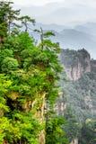 Красивый вид деревьев растя na górze утеса, гор воплощения Стоковая Фотография RF