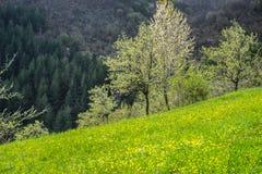 Красивый вид естественной красоты Взгляд красивых ландшафтов весны Красивые вечнозеленые деревья на заднем плане стоковые изображения