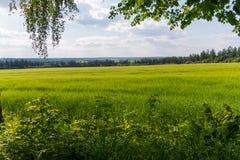 Красивый вид из-под зеленых ветвей дерева на луге с сочной травой и горами в расстоянии Стоковые Фотографии RF