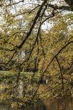 Красивый вид леса стоковые фото