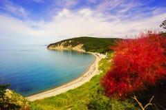 Красивый вид над морем от высоты, с цветками Стоковые Фото