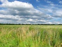 Красивый вид на луге травы и сценарном небе Стоковое Изображение RF
