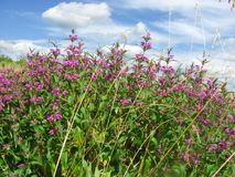 Красивый вид от полевые цветки на голубом небе Стоковое Изображение RF