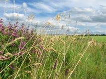 Красивый вид от травы на голубом небе Стоковое фото RF