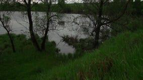Красивый вид от холма покрытого с зеленой травой к реке и деревьям видеоматериал
