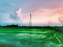 красивый вид рисовых полей дальше однажды вечером Стоковое Изображение
